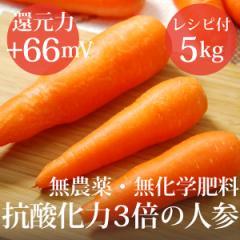 抗酸化力3倍の人参5kg ヴィーガンレシピ付き 無農薬・無化学肥料 還元力(抗酸化力)ORP+66mV