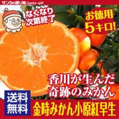 【送料無料】香川で生まれた 奇跡のみかん 小原紅早生 S〜Lサイズ金時みかん 5kg 小原紅みかん  紅くて 甘い