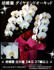 ダイヤモンドオーキッド 胡蝶蘭 白大輪 3本立ち 27輪以上(つぼみ込み) 送料無料(ヤ