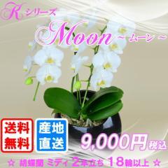 Kシリーズ 胡蝶蘭ミディ2本立ち 丸鉢(黒):ムーン 送料無料(ヤマト運輸での配送です