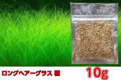 水草の種 【ロングヘアーグラス】 同等品 種から育てる水草/プレミアムシード ニューロングカーペット