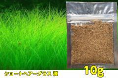 水草の種 【ショートヘアーグラス】 同等品 種から育てる水草/プレミアムシード ニューショートヘアー