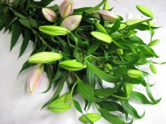 HBユリ (ロンバルディアPなど)5本 切花 生け花 花材