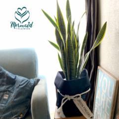 観葉植物 インテリア 開店祝い サンスベリア 8寸 新築祝い 誕生日 西海岸 男前 ジオメトリック ホームリー マイナスイオンたっぷり