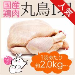丸鶏 丸鳥 中抜き 1羽 紀州うめどり 約2kg〜(3-6人前) クリスマスにローストチキン BBQに 鶏肉 国産