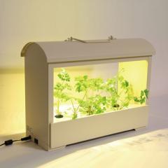 〈MotoM〉灯菜 Akarina05 アイボリー 水耕栽培