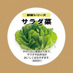 MotoM モトム 灯菜用サラダ菜水耕栽培種子セットMAS01 タネ 液体肥料 スポンジ