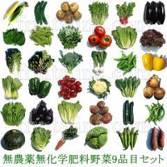 野菜9品目詰め合わせ 山梨県 北杜市産 無農薬 無化学肥料 栽培 一部地域を除く送料無料