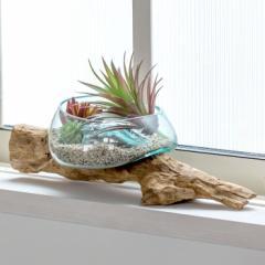ガラス鉢 流木 プランターオブジェ ガラスボウル オブジェ テラリウム 観葉植物 プランター ガラス容器 西海岸 男前 置物 Sサイズ