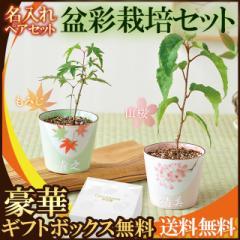 名入れ 盆栽 栽培セット プレゼント ペア 桜 紅葉 結婚祝い 結婚記念日 両親 名前入り 敬老の日 ギフト