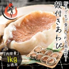 あわび 殻付き 1kg(約8〜9粒入り)アワビ 鮑 翡翠の瞳