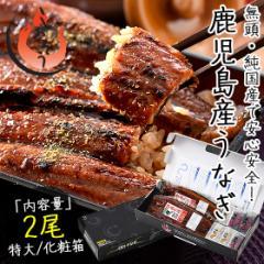 お中元 ギフト うなぎ 蒲焼き 無頭 鹿児島県産 国産 特大サイズ 約200g×2尾 ウナギ 鰻 化粧箱