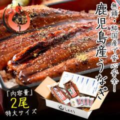 お中元 ギフト うなぎ 蒲焼き 無頭 鹿児島県産 国産 特大サイズ 約200g×2尾 ウナギ 鰻