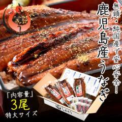 お中元 ギフト うなぎ 蒲焼き 無頭 鹿児島県産 国産 特大サイズ 約200g×3尾 ウナギ 鰻