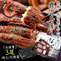 うなぎ 蒲焼き 無頭 鹿児島県産 国産 特大サイズ 約200g×3尾 ウナギ 鰻 化粧箱 f_ninki f_unagi
