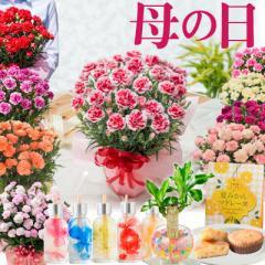 母の日 プレゼント カーネーション 鉢植え ギフト 選べる花色 赤 ピンク オレンジ パープル イエロー 変り咲き 香り 特典いっぱい 2021