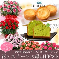 母の日 ギフト カーネーション 母の日 花とセット お菓子 スイーツ 鉢植え 花もお菓子も楽しめる プレゼント 赤 ピンク オレンジ 2021