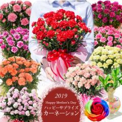 母の日 義母 ギフト カーネーション 鉢植え 赤 ピンク 黄色 紫 オレンジ 選べる花色とお母さんも大満足の幸せ特典がいっぱい ♪