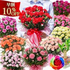 早割 10%OFF 母の日 義母 ギフト カーネーション 鉢植え 赤 ピンク 黄色 紫 オレンジ 選べる花色とお母さんも大満足の幸せ特典がいっぱ
