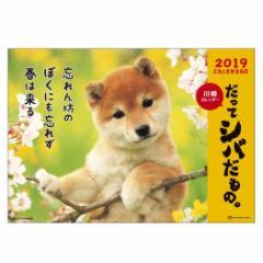 カレンダー 2019 年 だってシバだもの 壁掛け スケジュール いぬ 書き込み平成31年 暦  予約 cp100