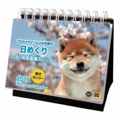 2019 カレンダー しばいぬ写真集カレンダー 卓上 日めくり いぬ インテリア平成31年 暦  予約 メール便可  cp100