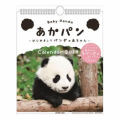 あかパン カレンダー2019年 赤ちゃんパンダ 壁掛け パンダ 動物 写真平成31年 暦 予約 メール便可  cp100