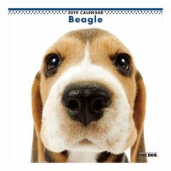 ビーグル 2019 カレンダー 壁掛け THE DOG いぬ 9月中旬発売予定 60×30cm 2019 Calendar 予約