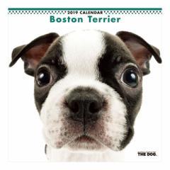 ボストンテリア カレンダー 2019 年 壁掛け THE DOG いぬ 9月中旬発売予定 60×30cm 2019 Calendar 予約