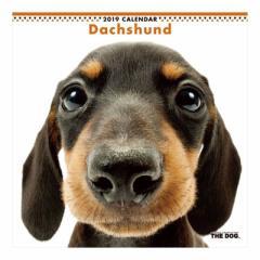 ダックスフンド カレンダー 2019 年 壁掛け THE DOG いぬ 9月中旬発売予定 60×30cm 2019 Calendar 予約
