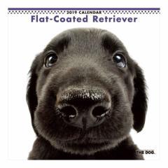 フラットコーテッドレトリーバー 2019 カレンダー 壁掛け THE DOG いぬ 9月中旬発売予定 60×30cm 2019 Calendar 予約