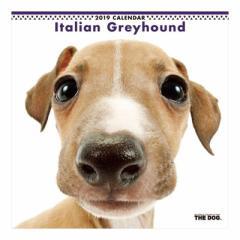 イタリアングレイハウンド カレンダー 2019 年 壁掛け THE DOG いぬ 9月中旬発売予定 60×30cm 2019 Calendar 予約