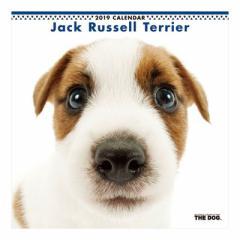 ジャックラッセルテリア 2019 カレンダー 壁掛け THE DOG いぬ 9月中旬発売予定 60×30cm 2019 Calendar 予約