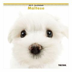 マルチーズ カレンダー 2019 年 壁掛け THE DOG いぬ 9月中旬発売予定 60×30cm 2019 Calendar 予約