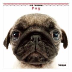パグ カレンダー 2019 年 壁掛け THE DOG いぬ 9月中旬発売予定 60×30cm 2019 Calendar 予約