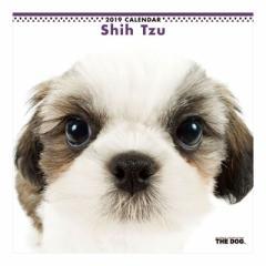 シーズー 2019 年 カレンダー 壁掛け THE DOG いぬ 9月中旬発売予定 60×30cm 2019 Calendar 予約