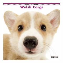 ウェルシュコーギー 2019 カレンダー 壁掛け THE DOG いぬ 9月中旬発売予定 60×30cm 2019 Calendar 予約