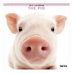THE PIG 2019 カレンダー 壁掛け ぶた 9月中旬発売予定 60×30cm 2019 Calendar 予約