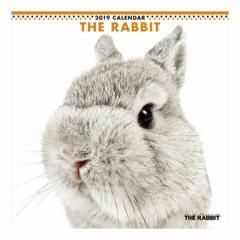 THE RABBIT 2019 年 カレンダー 壁掛け うさぎ 9月中旬発売予定 60×30cm 2019 Calendar 予約