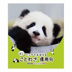 パンダでおぼえる ことわざ慣用句 2019 年 カレンダー 卓上 パンダ 9月中旬発売予定 18×15cm 2019 Calendar 予約 メール便可