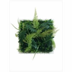 取寄品 送料無料 Wall Plants frame インテリア アート インダストリアルスタイル シダミックス ホワイトフレーム 額