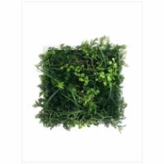 取寄品 送料無料 Wall Plants frame インテリア アート インダストリアルスタイル ワイルドグリーン ホワイトフレー