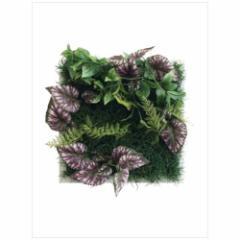 取寄品 送料無料 Wall Plants frame インテリア アート インダストリアルスタイル ベコニアミックス ホワイトフレー