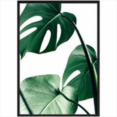 取寄品 送料無料 デザイナーズアート インテリア パネル PLANT FILE モンステラ1 額付きポスターインテリア雑貨通販
