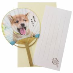 サマーカード 柴犬 一筆箋付き ミニ竹うちわカード お元気ですか? 暑中見舞い 日本製 グッズ メール便可