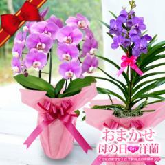 母の日プレゼント『母の日 洋ランギフト★★』迷ったらおまかせ!カーネーションよりも花持ちの良い洋蘭アレンジメントを令和元年の母の