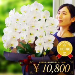 『胡蝶蘭 3本立ち 大輪「飛翔」』 立札・メッセージカード無料 お祝い、お供え(仏花)に!