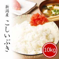 米 10kg こしいぶき 令和2年産 お米 安い 送料無料 精米 白米 新潟県産 ※沖縄へは別途送料