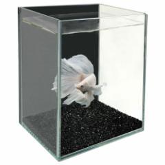 GEX 【グラステリア ベタ ブラック】 ベタを美しく魅せるガラス水槽
