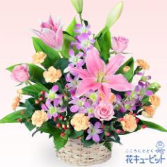 【お祝い】花キューピットのピンクユリのアレンジメント