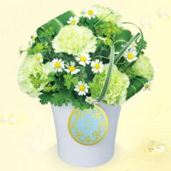 【お祝い】花キューピットのグリーンカーネーションのアレンジメント